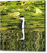 Reflecting Grebe  Canvas Print