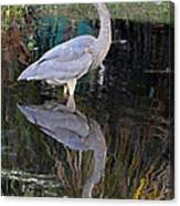 Reflecting Great Blue Heron Canvas Print