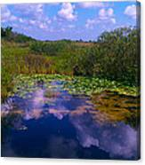 Reflecting In The Glades Canvas Print