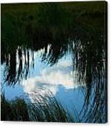Reflecting The Grass Canvas Print