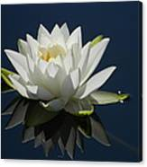 Reflecting Water Lilly Canvas Print