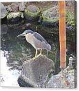 Reflection Of A Black-crowned Night Heron Canvas Print