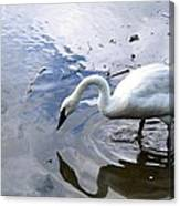 Reflection Of A Lone White Swan Canvas Print