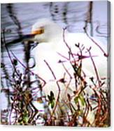 Reflection Of A Snowy Egret Canvas Print