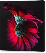 Reflection Of The Gerbera Canvas Print