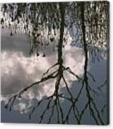 Reflection On Trees Canvas Print