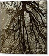 Reflection. Tree. Canvas Print