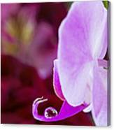 Reflections In A Water Drop Canvas Print