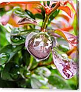Reflections In Raindrops Canvas Print