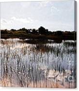 Reflections In The Everglades  Canvas Print