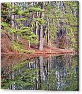 Reflections In The Pines Canvas Print