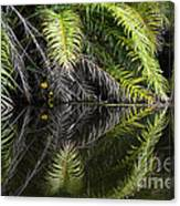 Reflections Marimbus River Brazil 2 Canvas Print