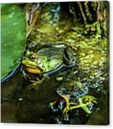 Reflections Of A Bullfrog Canvas Print
