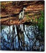 Reflections Of A Heron Canvas Print