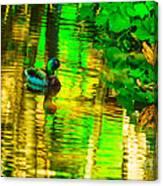 Reflections Of A Mallard Duck Canvas Print