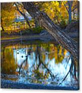 Reflections Of A Pond 2 Canvas Print