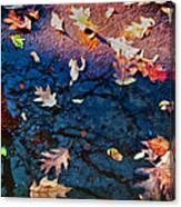 Seasons Of Refletion Canvas Print