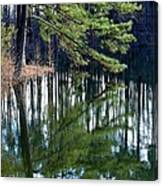 Reflections Of The Pine Canvas Print