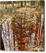 Reflections On A Forest Floor Canvas Print