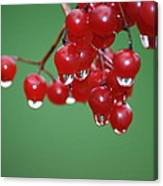 Reflective Red Berries  Canvas Print