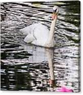 Reflective Swan Canvas Print