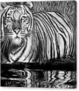 Reflective Tiger Canvas Print