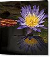 Reflective Water Lily Still Life Canvas Print