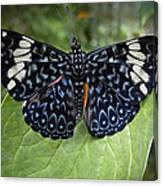 Regal Blue Butterfly Canvas Print
