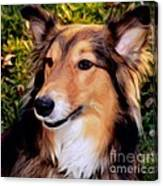 Regal Shelter Dog Canvas Print