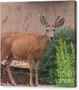 Reindeer In The Garden Canvas Print
