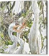 Rejecting Fledglings Canvas Print