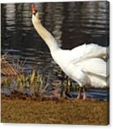 Relaxed Swan Canvas Print