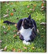 Relaxing In Autumn Canvas Print