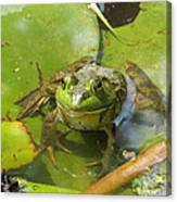 Relaxing On A Lily Pad  Canvas Print
