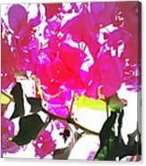Remember My Big And Beautiful Bouganvillea Canvas Print