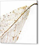 Remnant Leaf Canvas Print