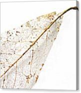 Remnant Leaf Canvas Print