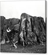 Remnant Of A Giant C. 1890 Canvas Print