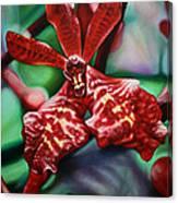 Renanthera Canvas Print