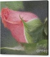 Rendition Of A Rose Canvas Print