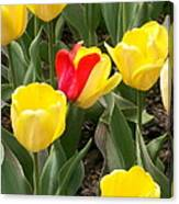Renegade Tulip Canvas Print