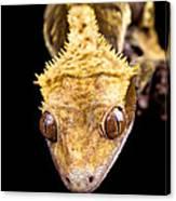 Reptile Close Up On Black Canvas Print