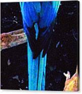 Resplendant Quetzal Of Costa Rica Canvas Print