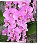 Resplendent Orchid Canvas Print