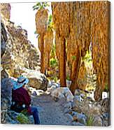 Rest Stop In Andreas Canyon Trail In Indian Canyons-ca Canvas Print