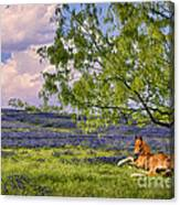 Resting Among The Bluebonnets Canvas Print