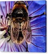 Resting Bee Canvas Print