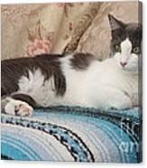 Resting Cat Canvas Print