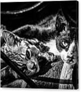 Resting Cats Canvas Print