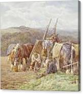 Resting In The Field  Canvas Print